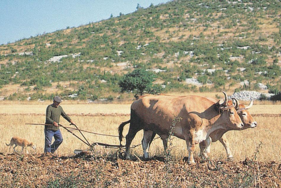 Les paysans finissent la photo